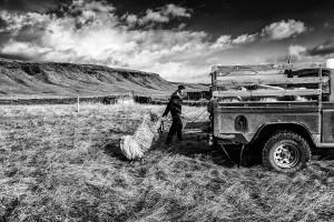 Iceland-photos-E30A5964