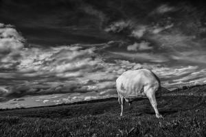 Iceland-photos-IMG_3623