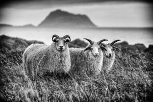 Iceland-photos-E30A7329