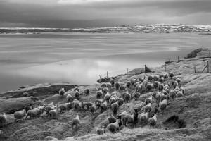 Iceland-photos-ISBC0839
